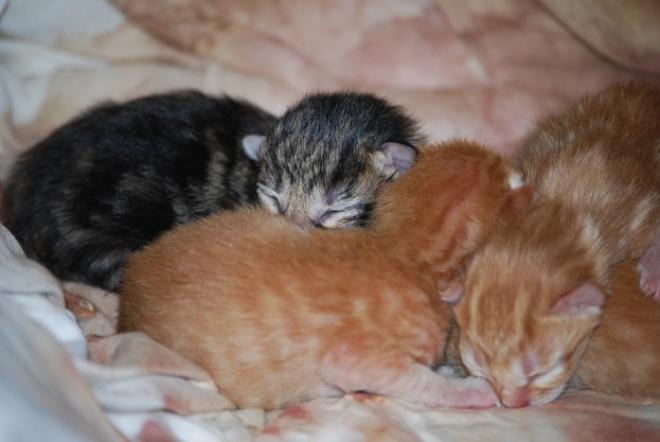 Blog Kittens, 2014 012