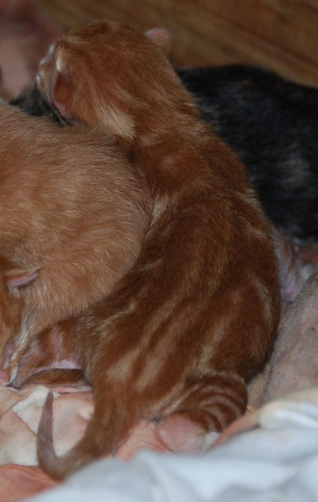 Kittens, 2014 087 crop